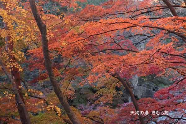 19 もみじ公園 11月_001(S).jpg