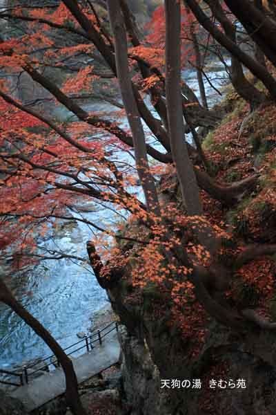 19 もみじ公園 11月_029(S).jpg