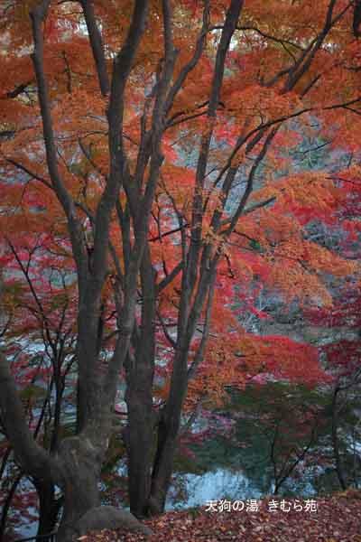 19 もみじ公園 11月_041(S).jpg