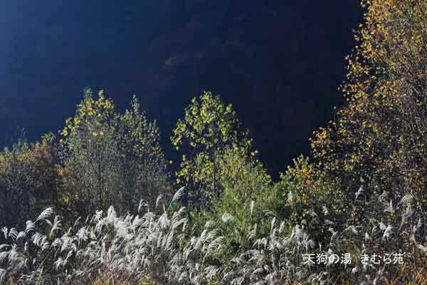 4 裏見の滝 11月_005 (S).jpg