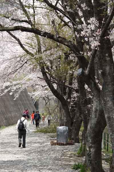 諏訪峡 4月_111(S).jpg