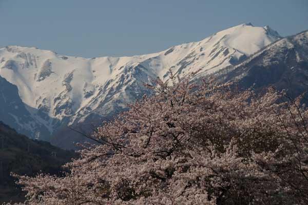 諏訪峡 4月_149(S).jpg