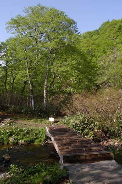 水源の森 6月_022(S).jpg