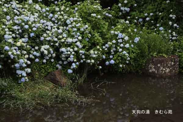 泰寧寺 7月_006(S).jpg