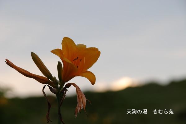 谷川岳 7月_034(S).jpg
