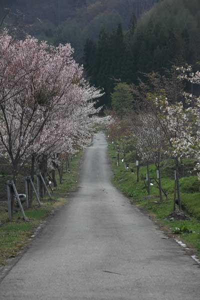明川 5月_065(S).jpg