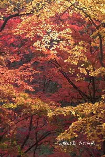 もみじ公園 11月_032(S).jpg