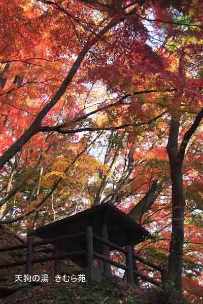 もみじ公園 11月_079(S).jpg