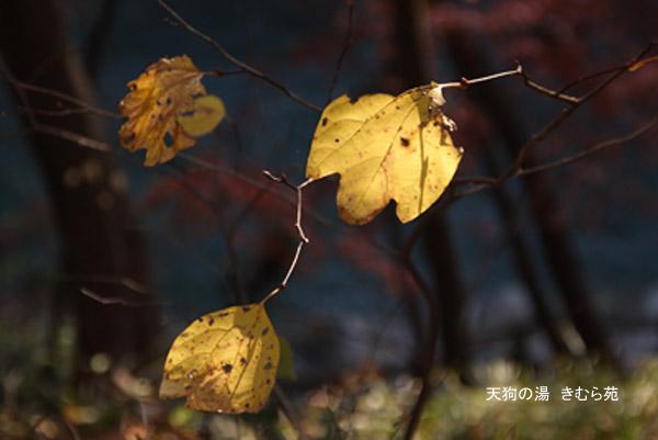 もみじ公園 11月_131(S).jpg