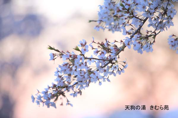 前橋 4月_169(S).jpg