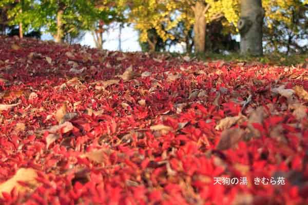 沼田 11月_086(S).jpg