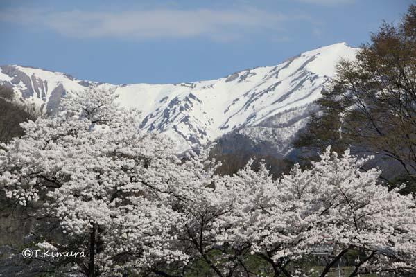 諏訪峡 4月�A(S).jpg