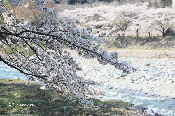 諏訪峡 4月�B(S).jpg