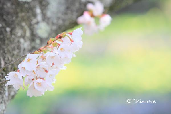 諏訪峡 4月�D(S).jpg