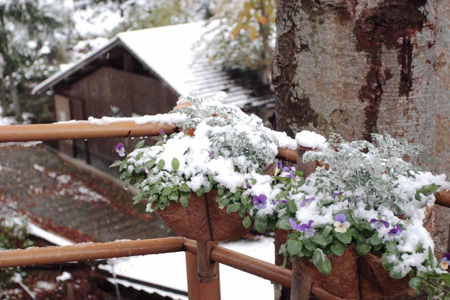 プランター/雪化粧