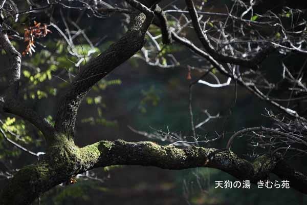 16 苑庭 11月_065(S).jpg
