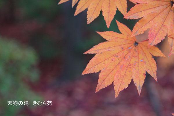 17 沼田公園 11月_015(S).jpg