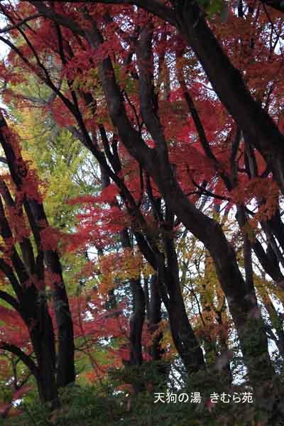 17 沼田公園 11月_023(S).jpg