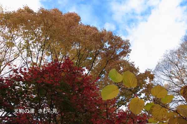 18 苑庭 11月_085(S).jpg