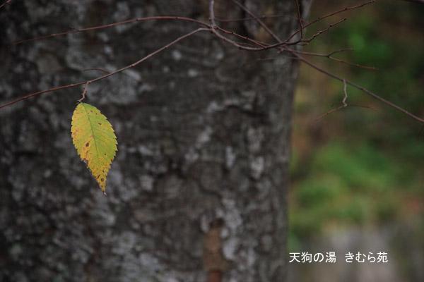 18 苑庭 11月_095(S).jpg