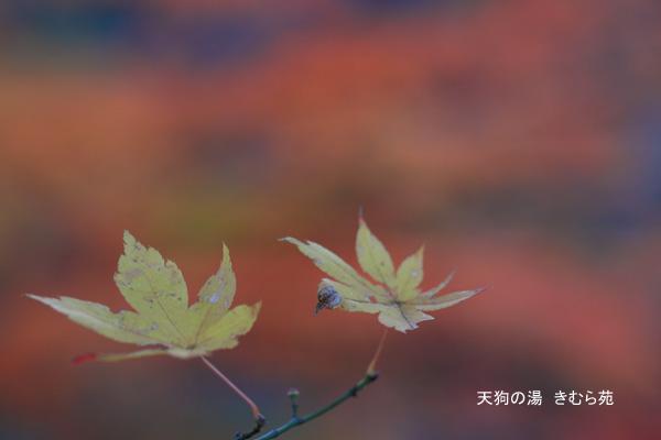 19 もみじ公園 11月_074(S).jpg