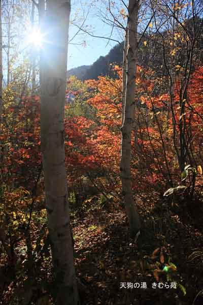4 裏見の滝 11月_014(S).jpg