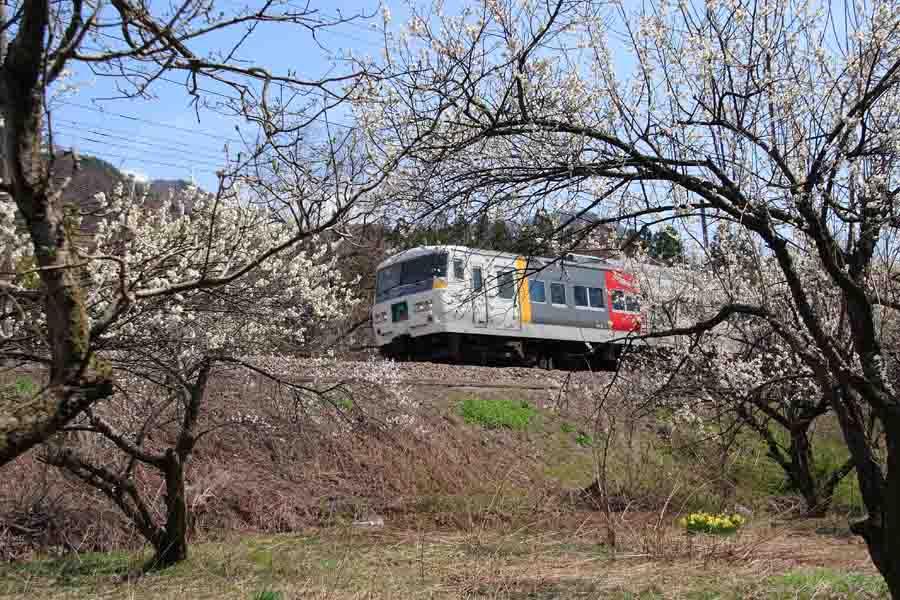 梅と特急列車
