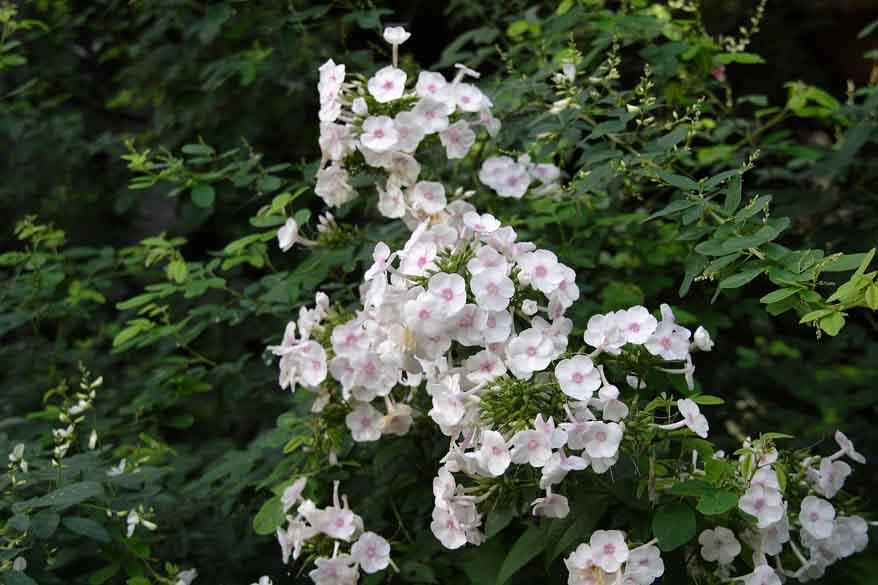 苑庭/白い花