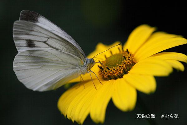 苑庭 7月_072(S).jpg