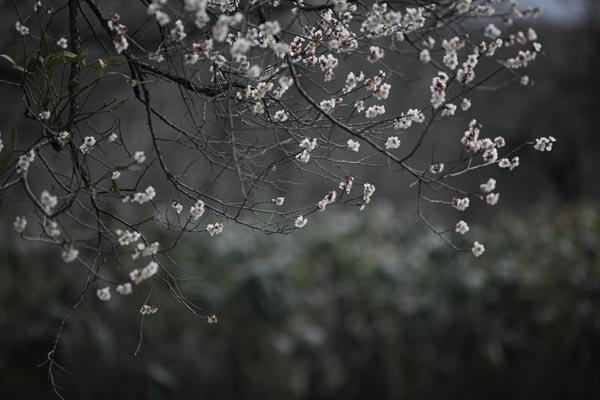 周辺 4月_040(S).jpg
