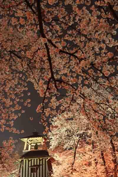 沼田公園 4月_103(S).jpg