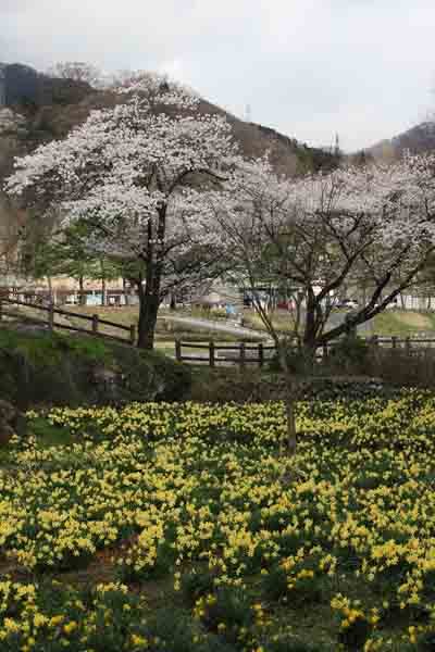 諏訪峡 4月_007(S).jpg