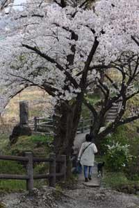 諏訪峡 4月_009(S).jpg