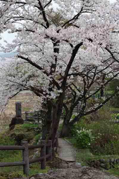 諏訪峡 4月_013(S).jpg