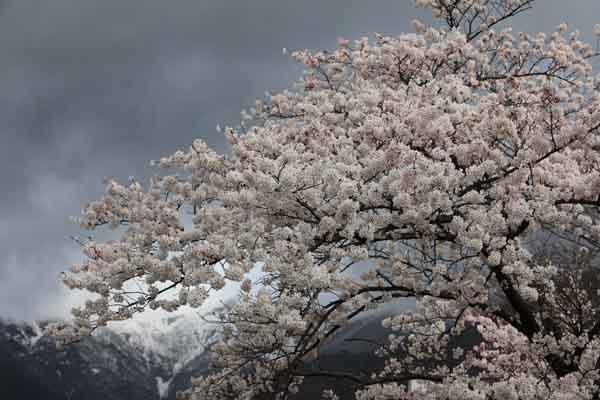 諏訪峡 4月_043(S).jpg