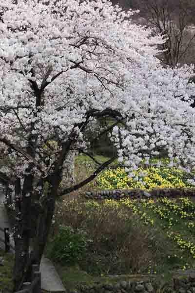 諏訪峡 4月_054(S).jpg