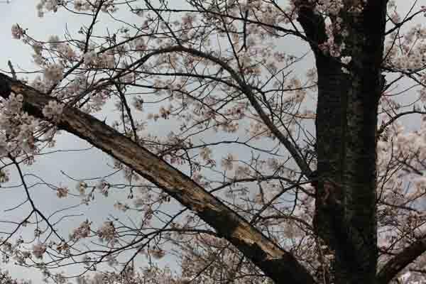 諏訪峡 4月_070(S).jpg