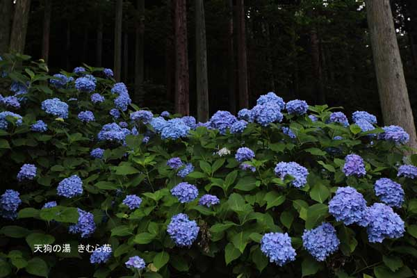 みなかみの森 7月_005(S).jpg