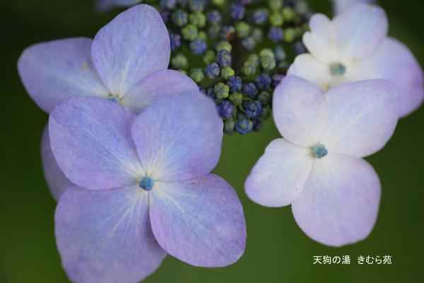みなかみの森 7月_018(S).jpg
