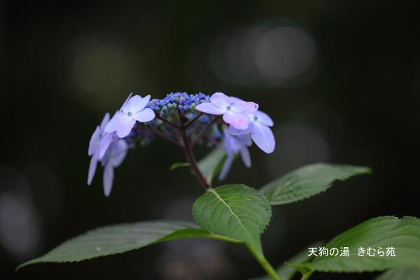 みなかみの森 7月_022(S).jpg