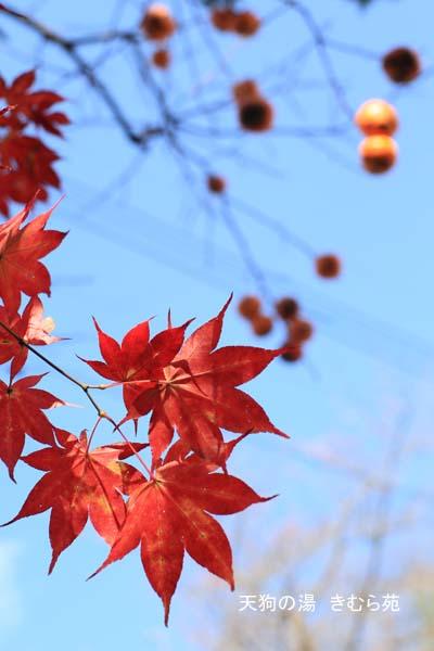 周辺 11月_040(S).jpg
