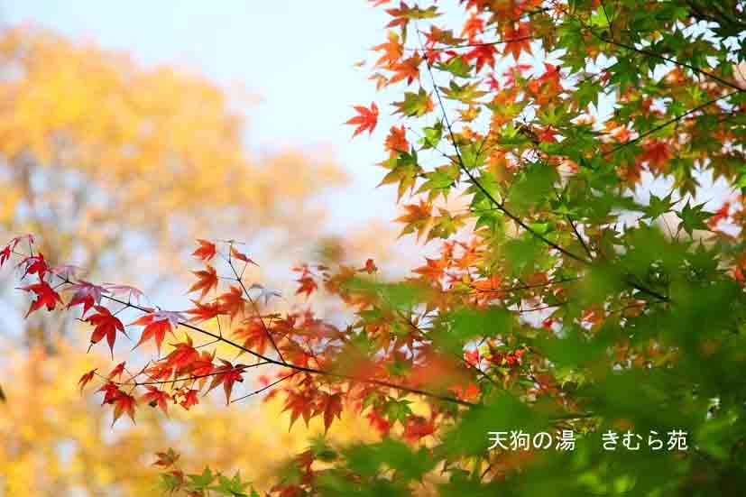 周辺 11月_058(S).jpg