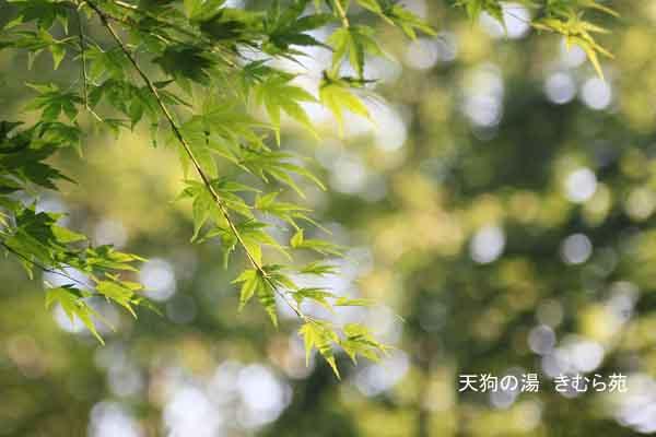 周辺 6月_063(S).jpg
