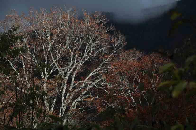 水源の森 10月_006(S).jpg