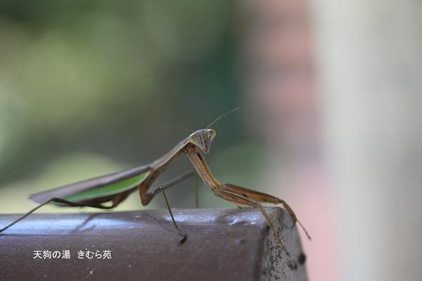 苑庭 10月_025(S).jpg