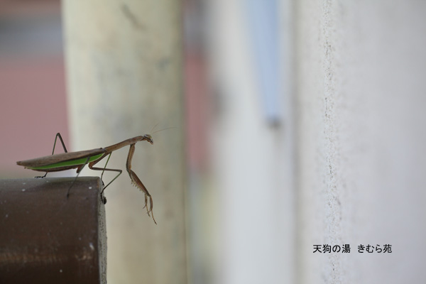 苑庭 10月_031(S).jpg