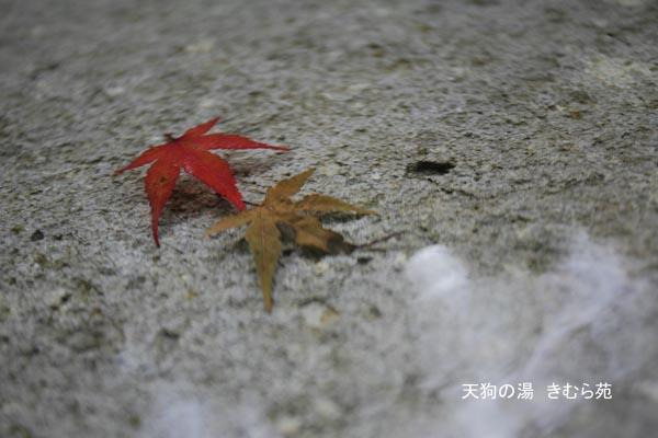 露天風呂 11月_030(S).jpg